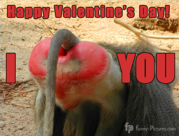 Heart shaped baboon butt  valentine's day